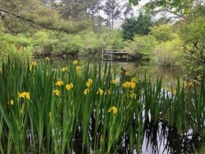 Mytoi Gardens